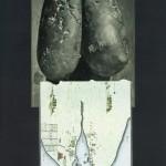 Titikakasee
